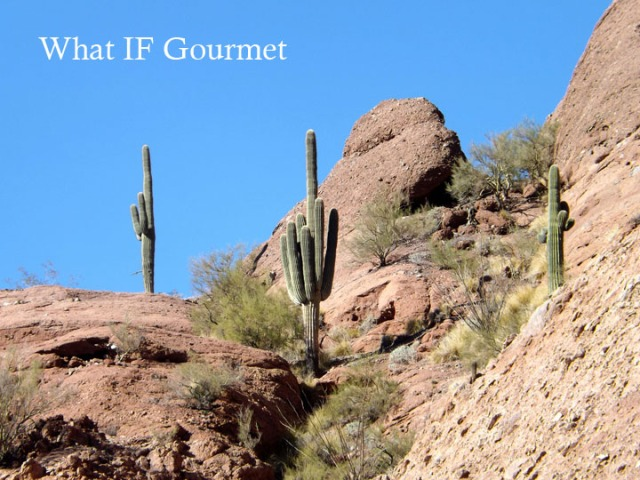 Saguaro cactus on Camelback Mountain, Phoenix, AZ.